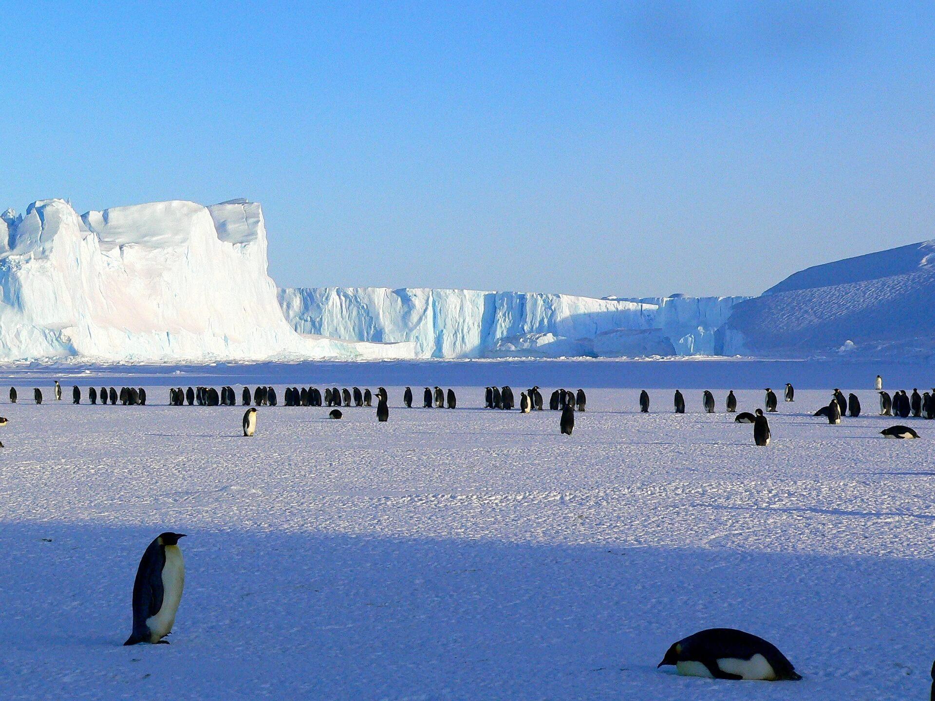 Penguins Atarctica